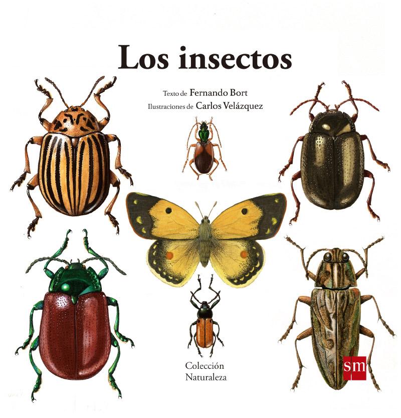 Los insectos · SM