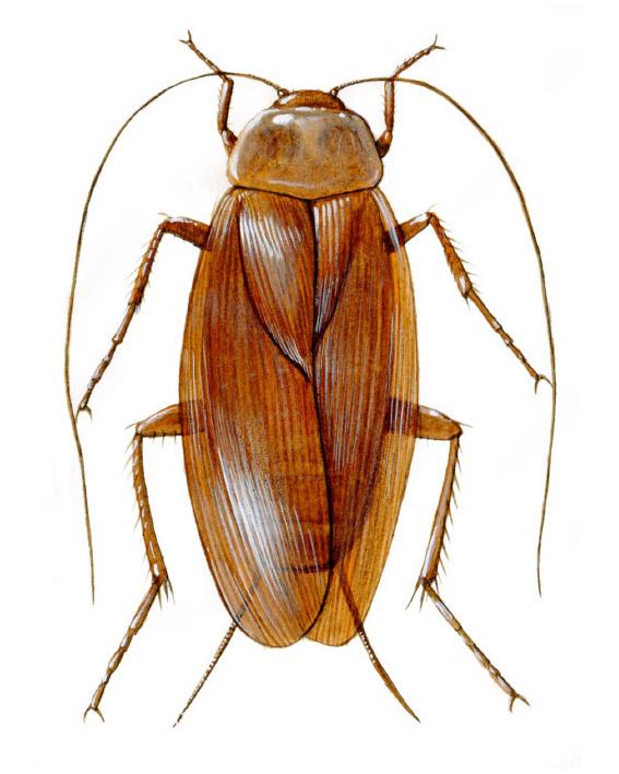 Carlos_V_2015_SM_Insectos (06)