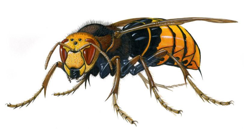 Carlos Velázquez Los insectos