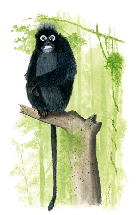 Carlos Velázquez Los primates