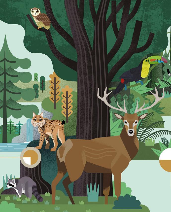 El bosque en cifras - Revista Pantera